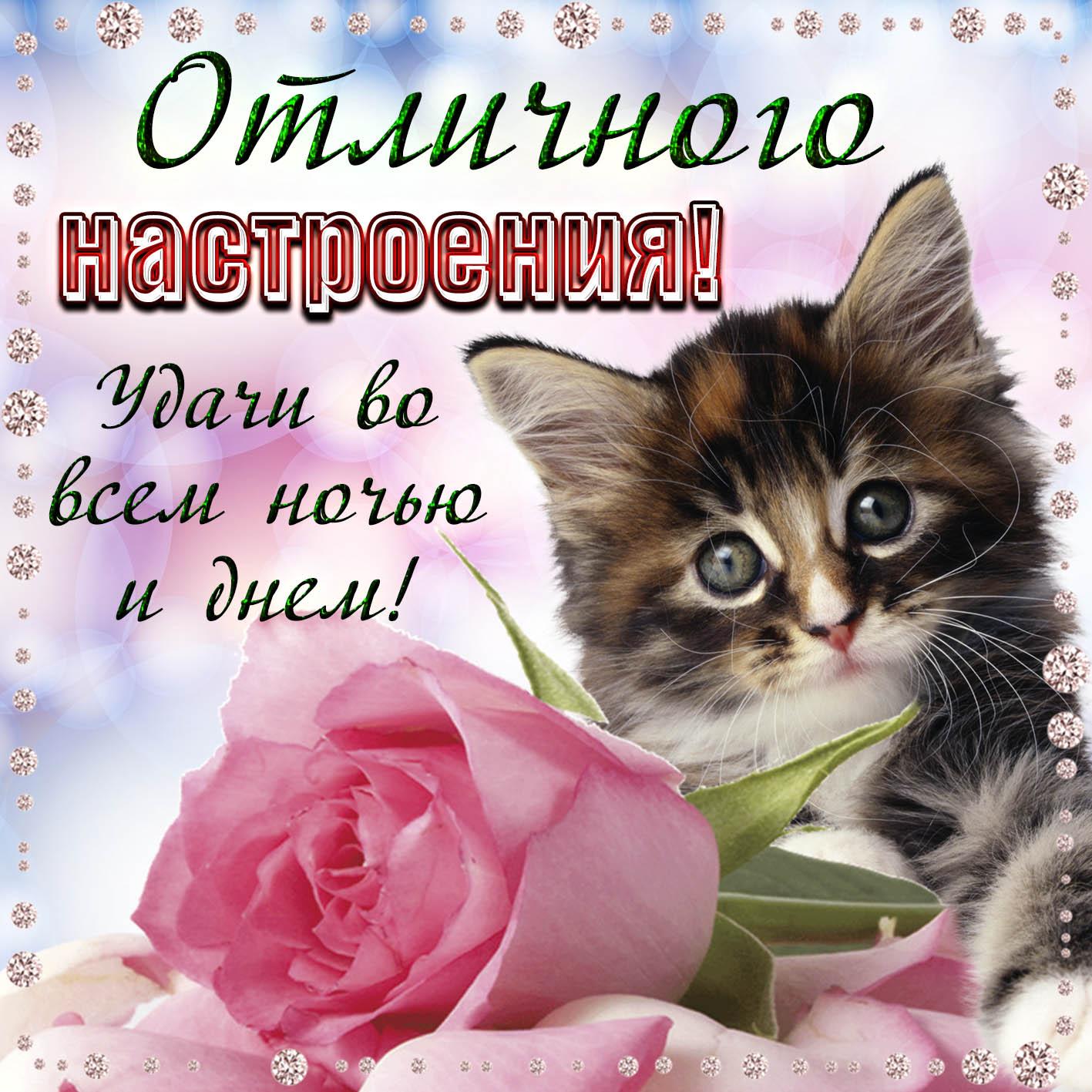 Котятами, удачи на весь день картинки