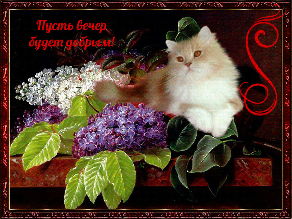 Добрый вечер красивые открытки